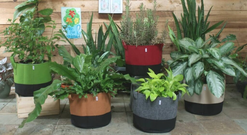 Fabric grow bags in a patio