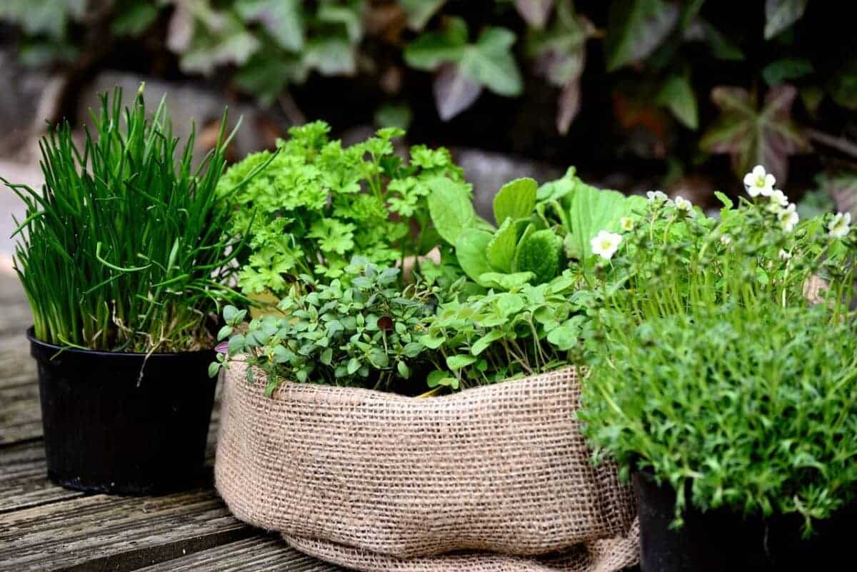 Choosing plants for container gardening