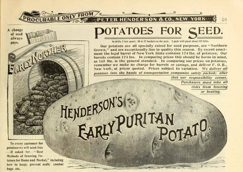 Potatoes for seed